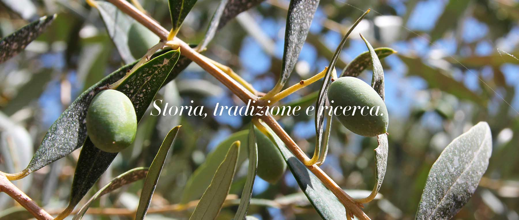 header-home03-olive